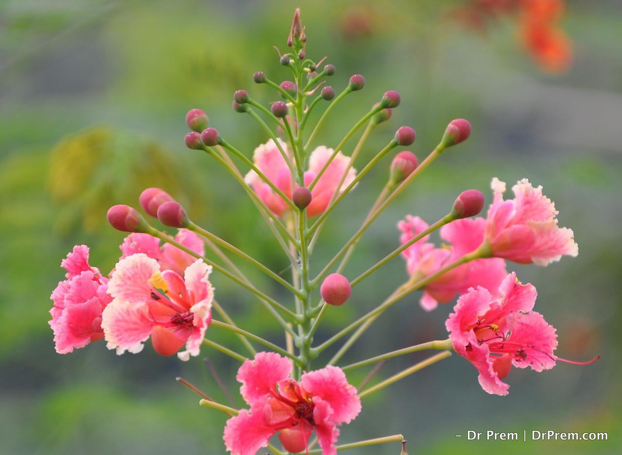 Flowers - Botanic -Garden - Orchid Garden - Singapore BY DR PREM-004