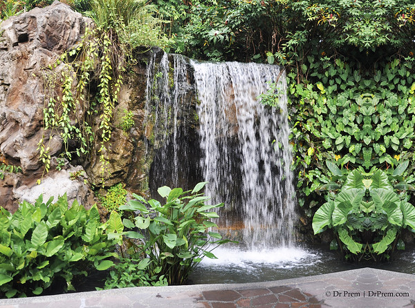 Flowers - Botanic -Garden - Orchid Garden - Singapore BY DR PREM-015