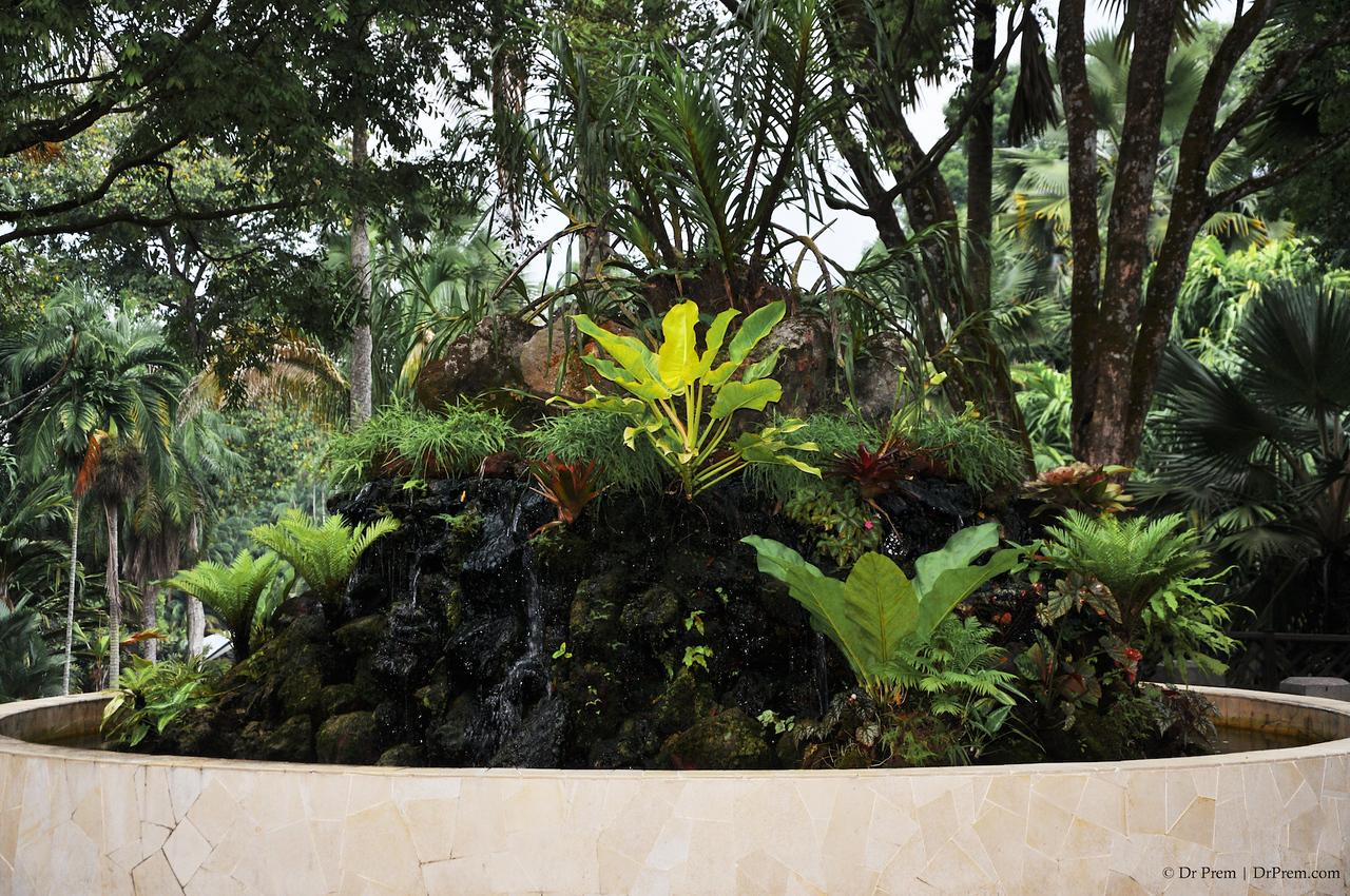 Flowers - Botanic -Garden - Orchid Garden - Singapore BY DR PREM-091