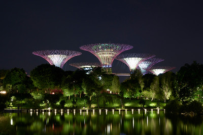 Supertrees @ Gardens by the Bay