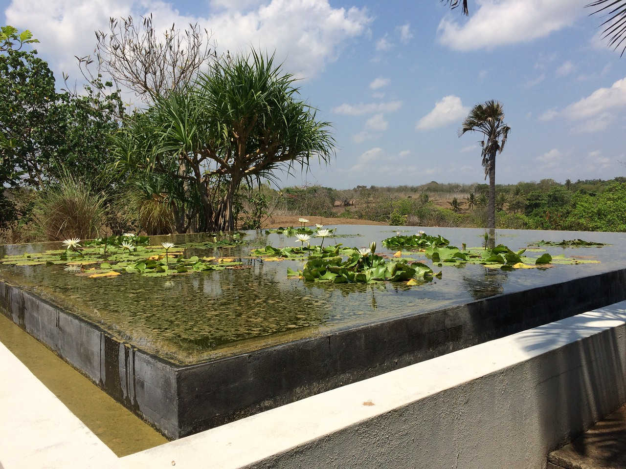 View of rice fields from the lily pool.