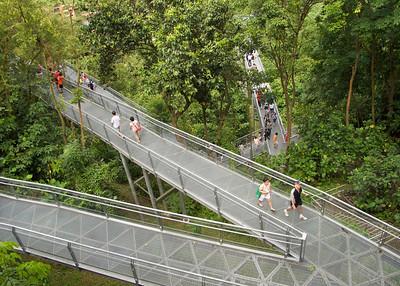 Southern Ridges - Treetop Walk