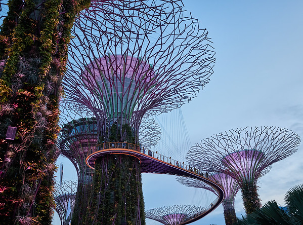 The Supertrees in Gardens By The Bay