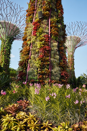 Detail of the Supertrees in Gardens By The Bay