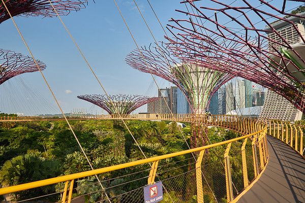 The dizzying walkway at the Supertrees Grove in Gardens By The Bay