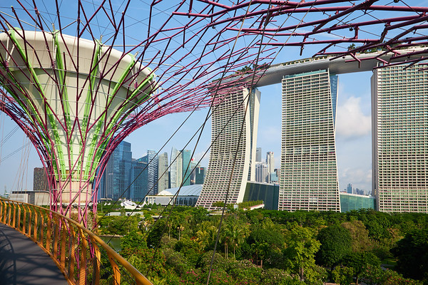 The view from the  dizzying walkway at the Supertrees Grove in Gardens By The Bay
