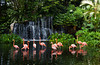 Flamingo ponds of Carribean Flamingos at the Jurong Bird Park in Singapore, East Asia.