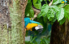 A lone Macaws at the Jurong Bird Park in Singapore, East Asia.