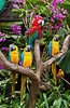 Macaws, parrots and tropical birds at the Jurong Bird Park in Singapore, East Asia.