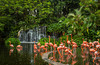Flamingo ponds of Carribean Flamingos at the Jurong Bird Park in Singapore.