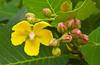 Tropical flowers on Sentosa Island, Singapore, East Asia.