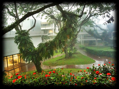 A rainy day at the National University of Singapore (iphone photo; Engineering Faculty)
