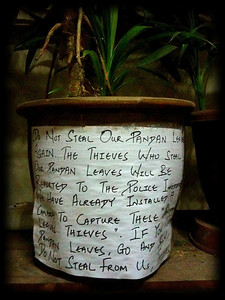 "Warning on a potted plant: ""Do not steal our pandan leaves"""