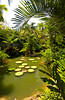 Giant lily pads in a pool in the Singapore Botanic Gardens, East Asia.