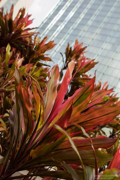 Flowers outside Marina Bay Sands Casino