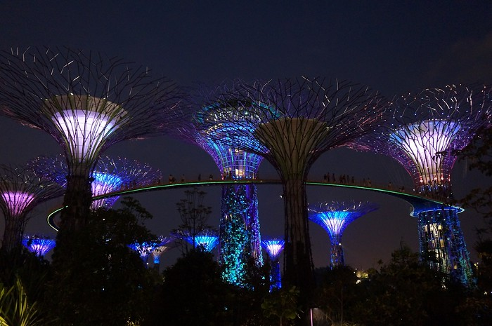 The Super Trees lit up at night during the Garden Rhapsody in Singapore.