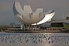 Sun catching a Lotus Blossom pedal ~ The structure is an Art & Science Museum in front of the Marina Bay Sands Hotel.