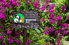 Singapore Zoo sign with bougainvillea flowers in Singapore, East Asia.