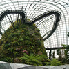 Cloud Forest walkway at the Gardens by the Bay