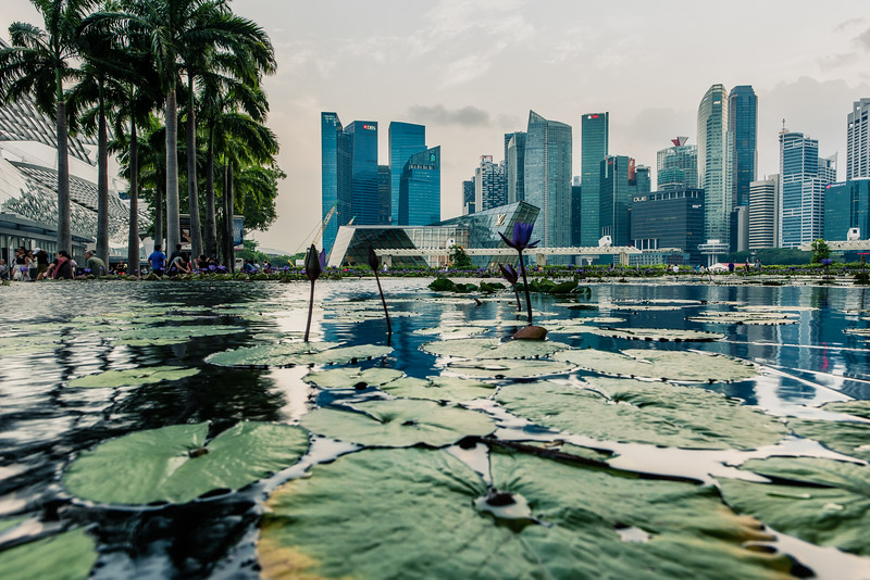 View of Singapore downtown from ArtScience Museum Lily Pond.