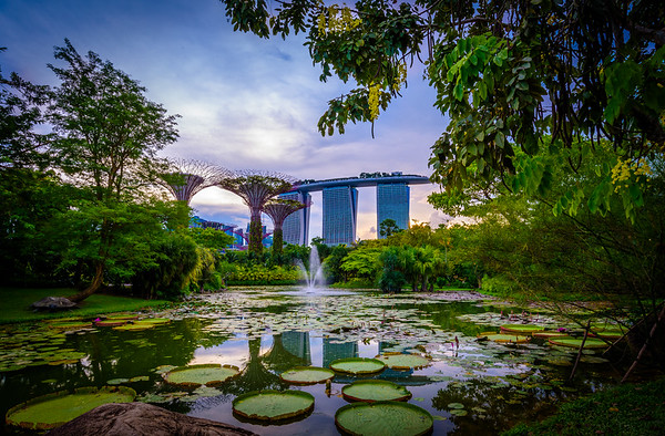 Lily pond at Gardens  by the Bay