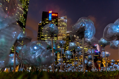 Moonflowers at Marina Bay