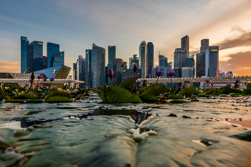 View of Singapore's CBD from the water lily pond at ArtScience Museum.