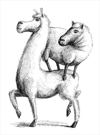 Llama and Sheep