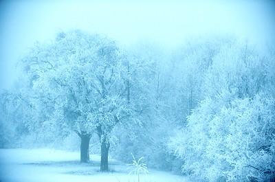 winter-2009-00013