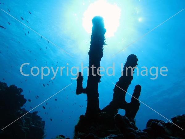 Cozumel underwater