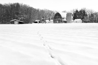 Deer tracks to the Farm