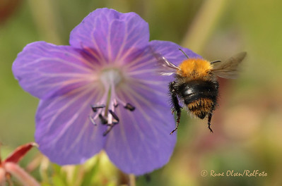 Bier og blomster og sånt....