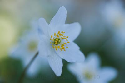 Vårlig skjønnhet