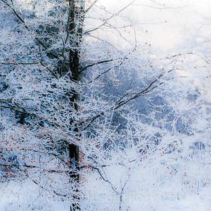 Frostbøk