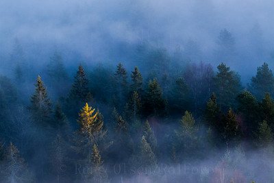 Fyrtårn i eventyrskog