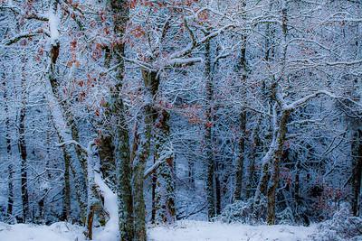 Vintereik 2