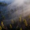 Tåkeskog i solnedgang
