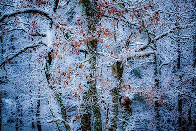 Vintereik 1