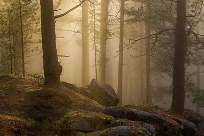 En ny dag i tåkeskogen