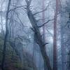 Gammelskogens mystikk