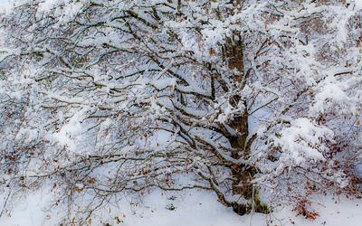 Snøtung vinterbøk