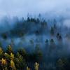 Disig kveldsstemning over de dype skoger