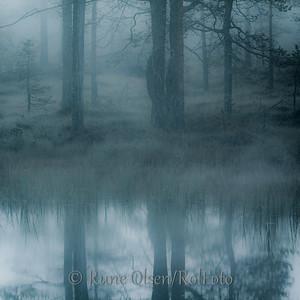 Skogens speil