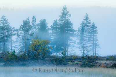 Skogens ro