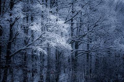 Vinterdekorert