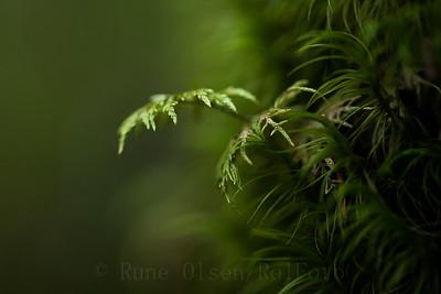 Grønn mosesymfoni