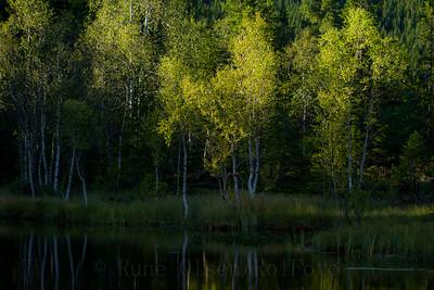 Sommeridyll ved skogstjernet