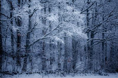 Vintereventyrskog