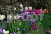 DSCN8185_pe Tulipbeds 2 4-12-18