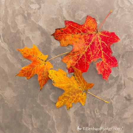 Fall Trio